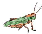 A grasshopper, the course's mascot.