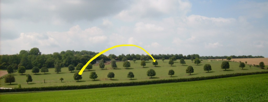 A big yellow arrow, from one tree on o photo of several tree rows, to another farther behind.